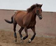 verletzung tiefe beugesehne pferd